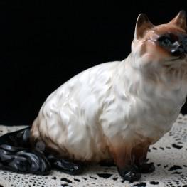 Гималайский кот, Shafford, Япония,